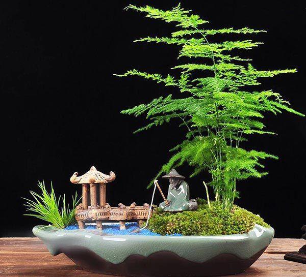 Cậy vân trúc là loại cây khá phù hợp với mạng Mộc
