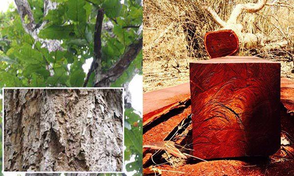 Gỗ cầm xe các tác dụng cách âm cách nhiệt và chống nước tốt - Nadu Furniture