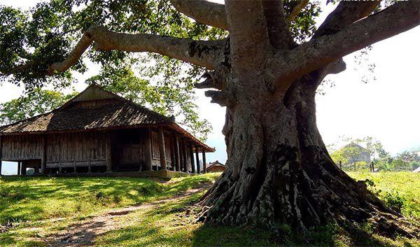 Gỗ nghiến được sử dụng nhiều để làm kèo cột nhà và đặc biệt để làm thớt gỗ nghiến