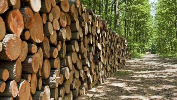 Gỗ tự nhiên là gì - Ưu nhược điểm và ứng dụng của gỗ tự nhiên